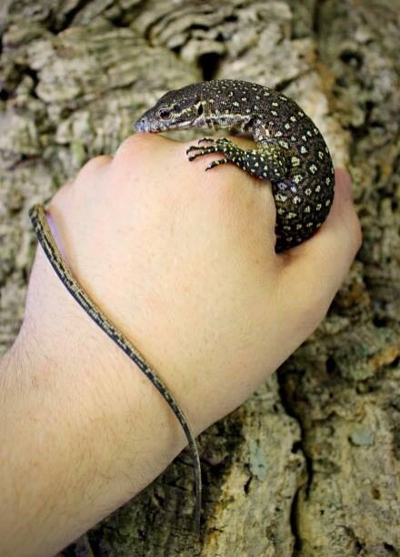 dark black brown lizard hand image