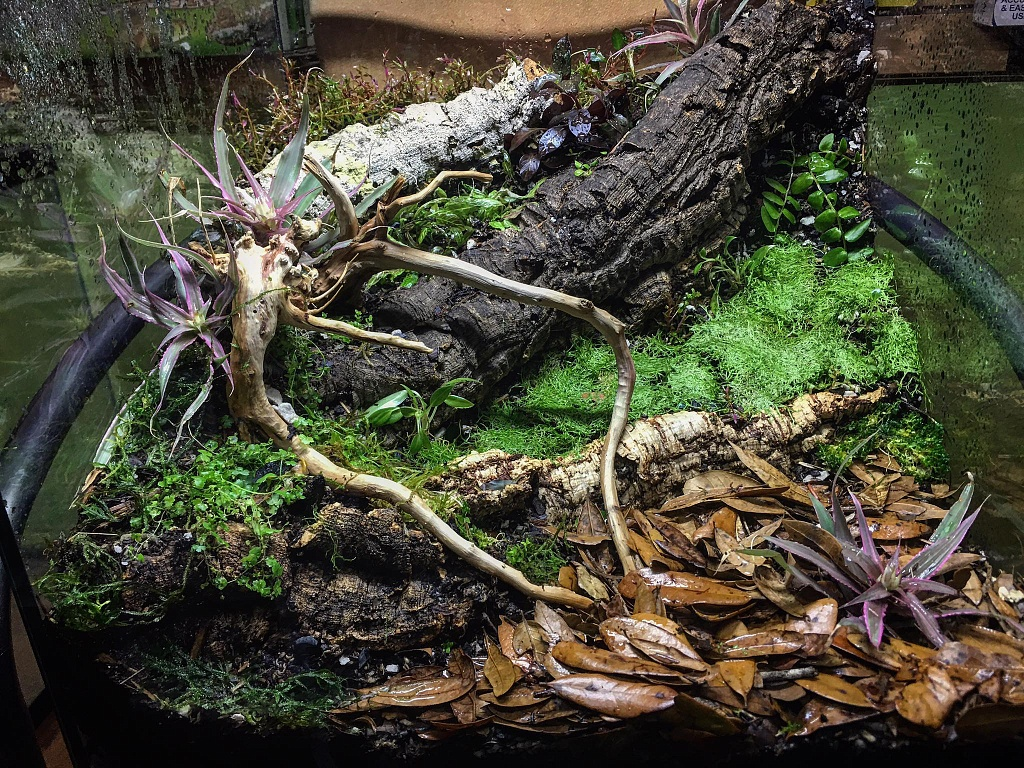 Custom Enclosure with logs and moss image