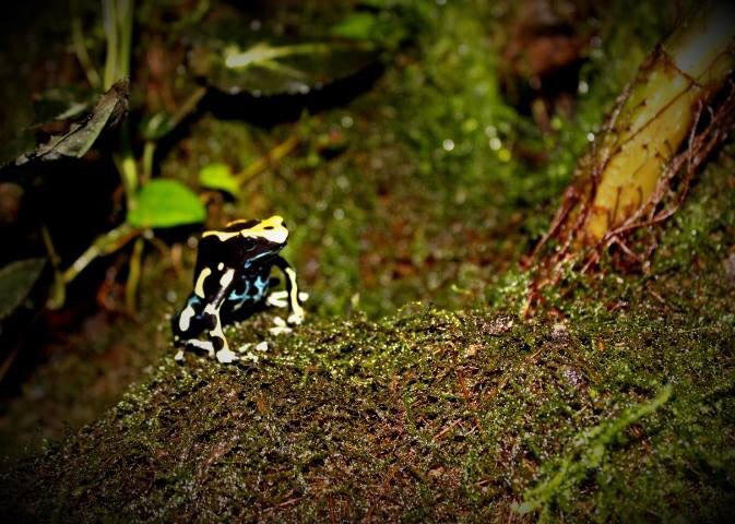 black and yellow frog on moss image