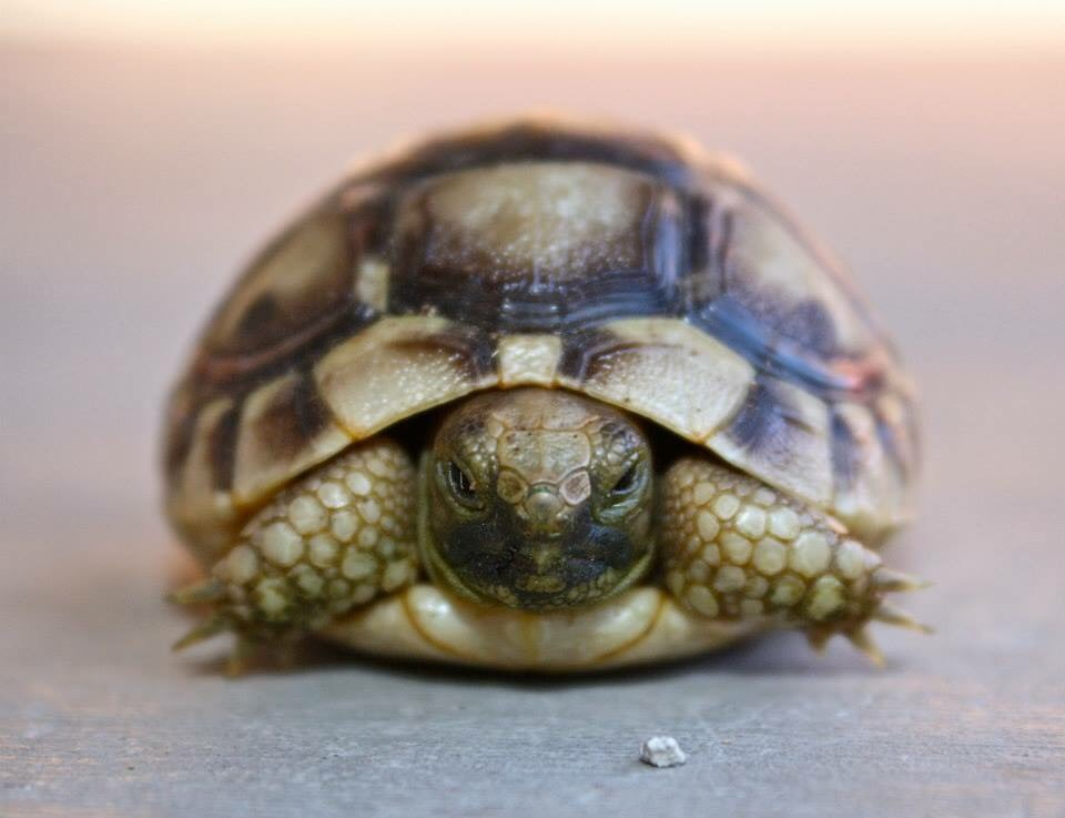 green brown tortoise image