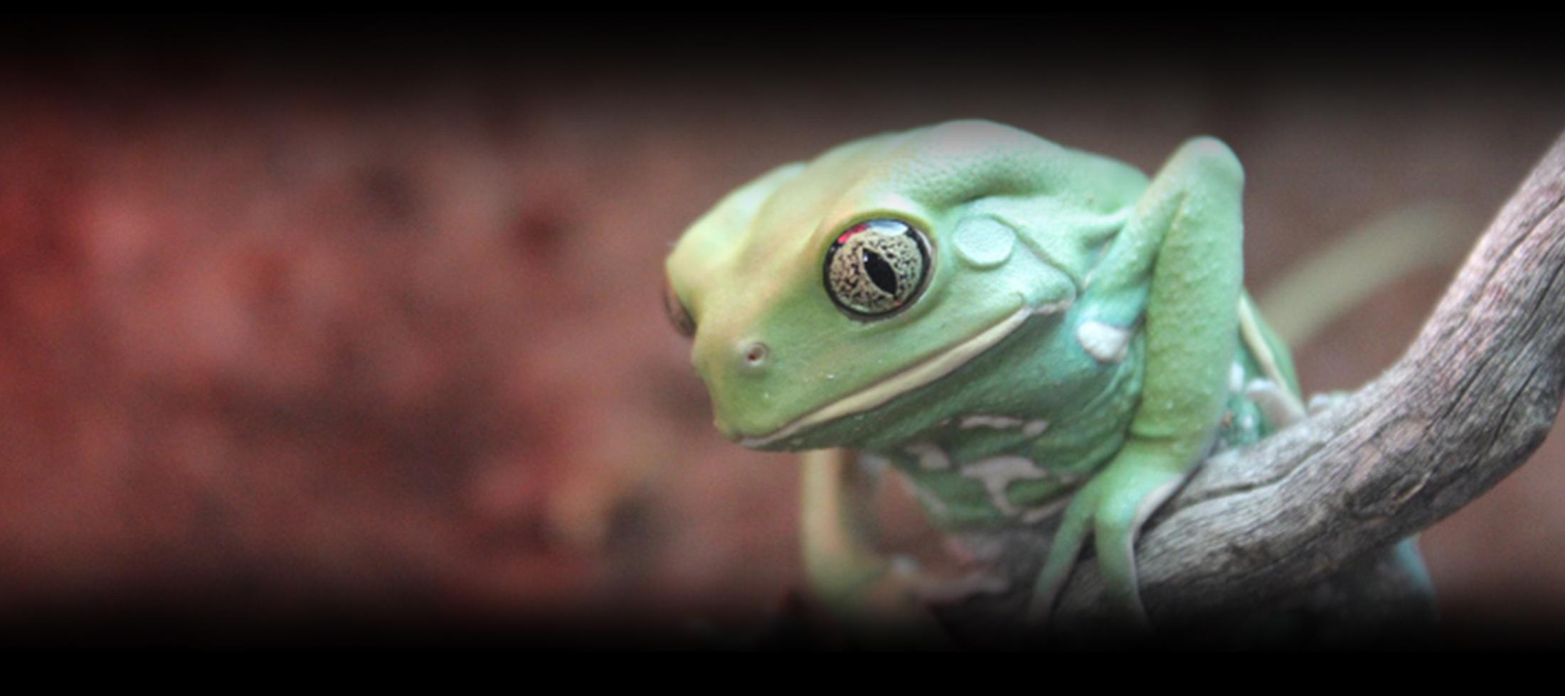 green white frog header image