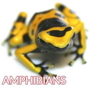 yellow black amphibians image