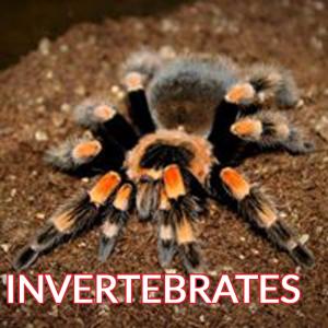 invertebrates tarantula spider image